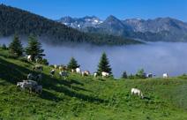 Pays Haute Vallee de l'Aude